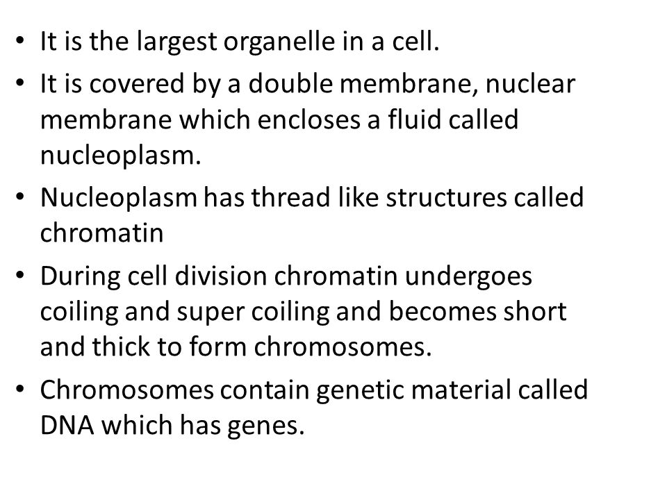 It is the largest organelle in a cell.