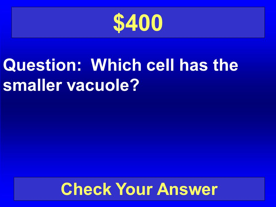 $400 Question: Which cell has the smaller vacuole Check Your Answer