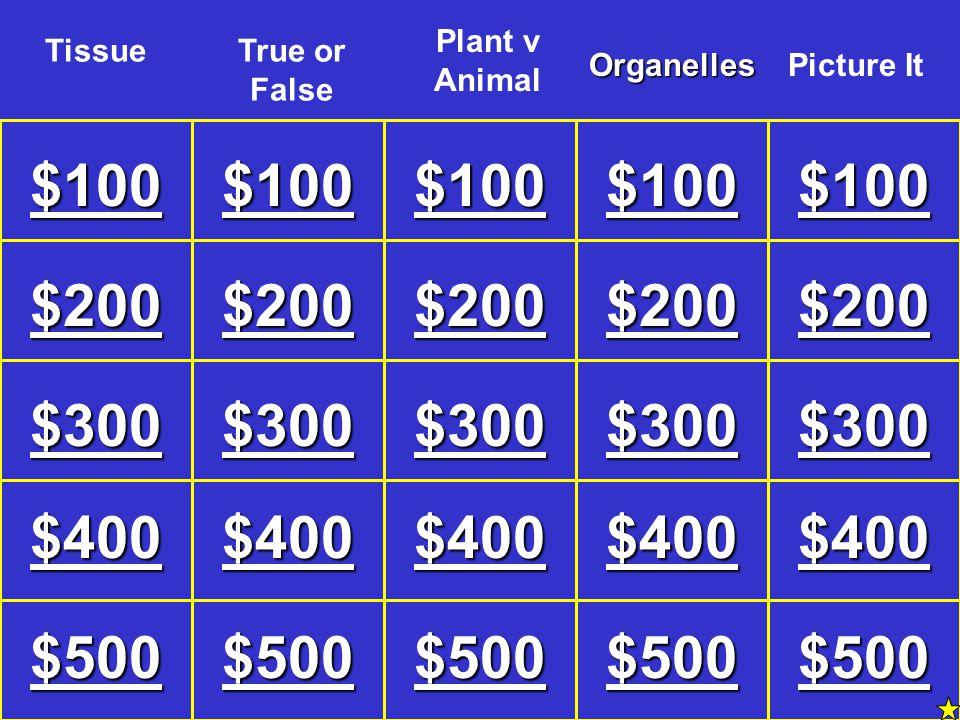 Plant v Animal Tissue. True or False. Organelles. Picture It. $100. $100. $100. $100. $100.