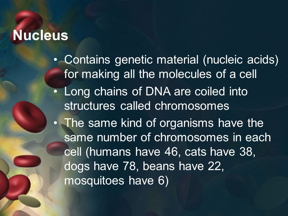 Nucleus Contains genetic material (nucleic acids) for making all the molecules of a cell.