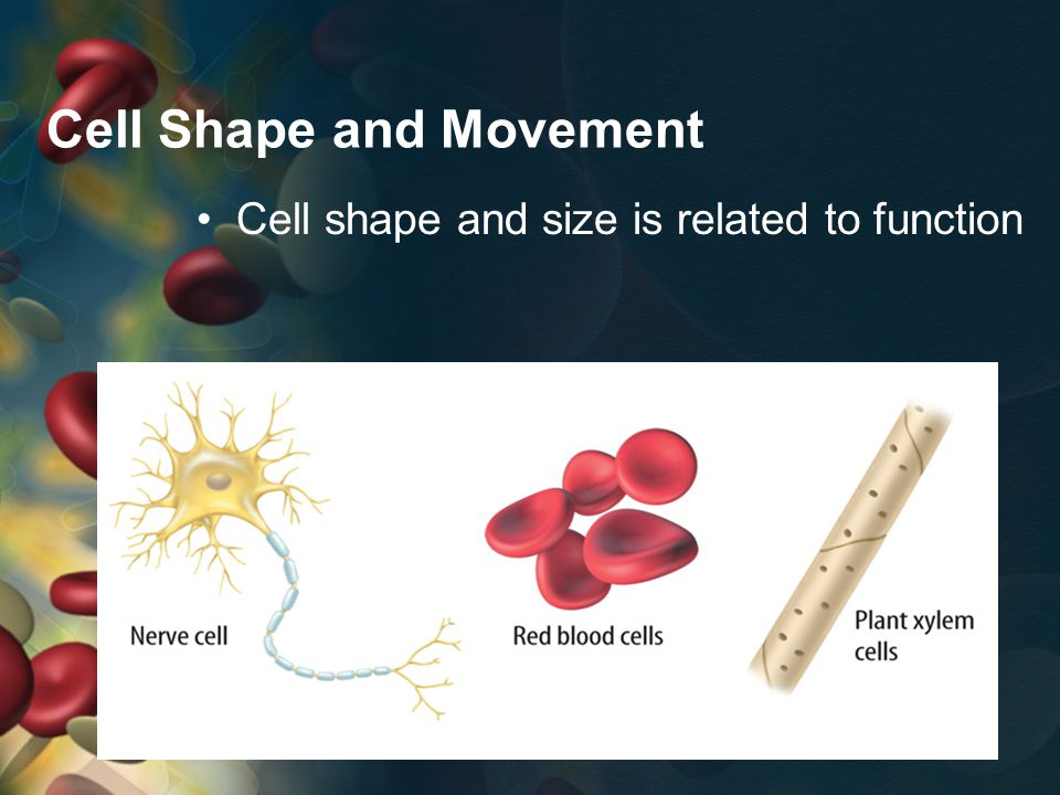 Cell Shape and Movement