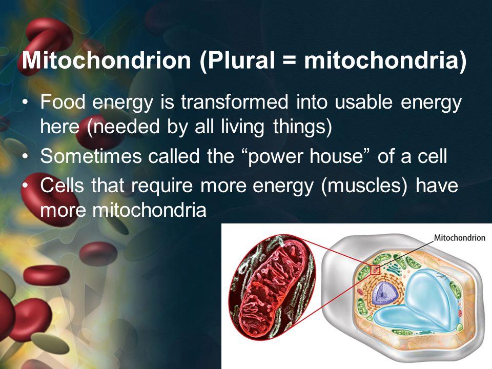 Mitochondrion (Plural = mitochondria)