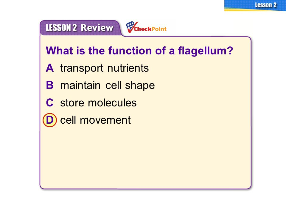 What is the function of a flagellum A transport nutrients