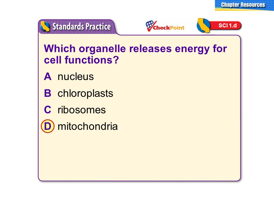 Which organelle releases energy for cell functions A nucleus