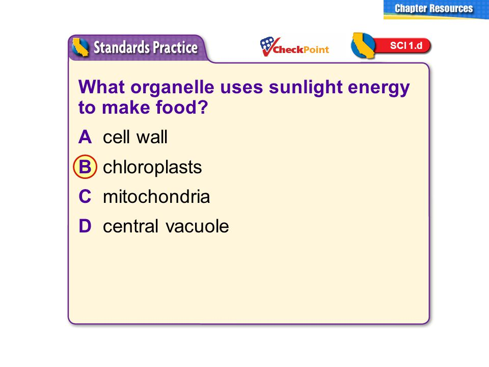 What organelle uses sunlight energy to make food A cell wall