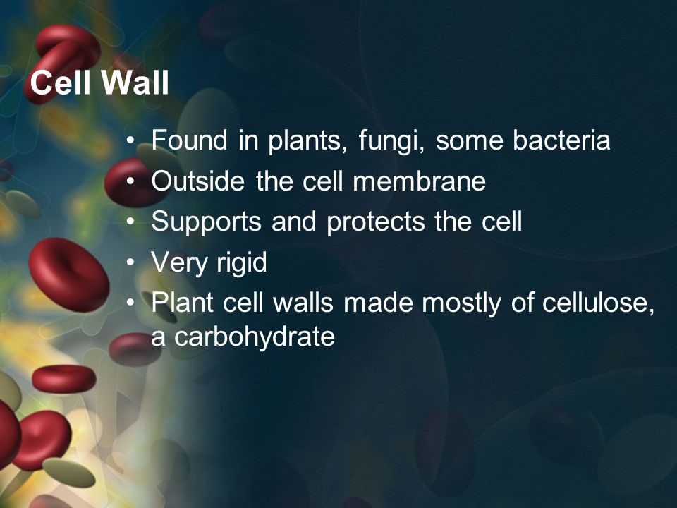 Cell Wall Found in plants, fungi, some bacteria