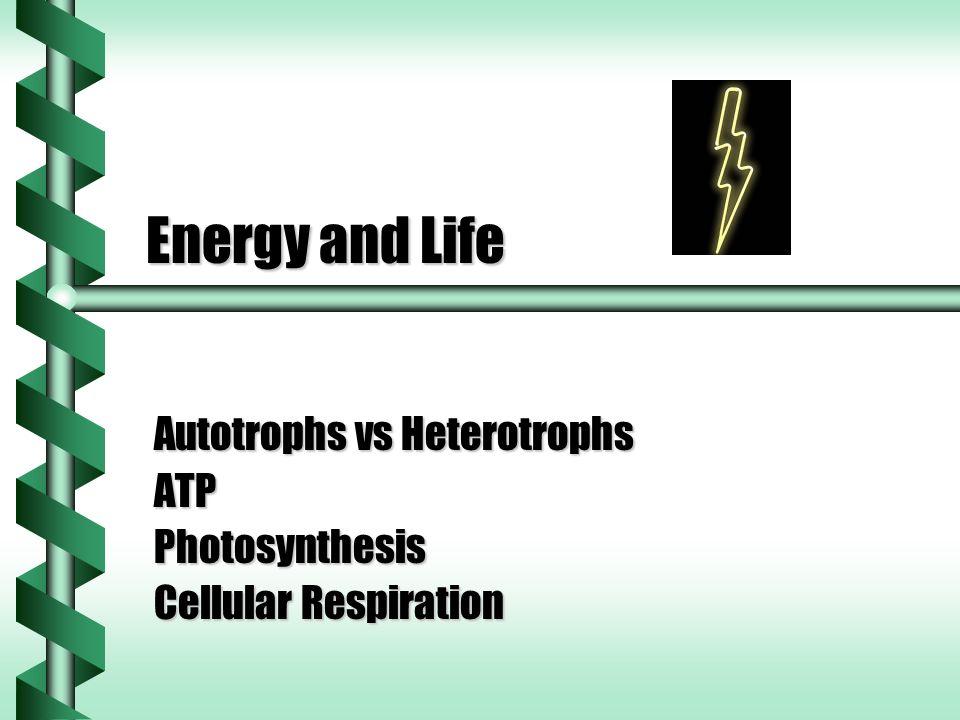 Autotrophs vs Heterotrophs ATP Photosynthesis Cellular Respiration