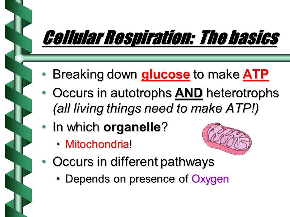 Cellular Respiration: The basics