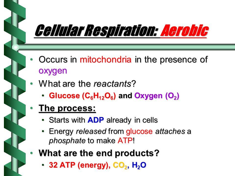 Cellular Respiration: Aerobic