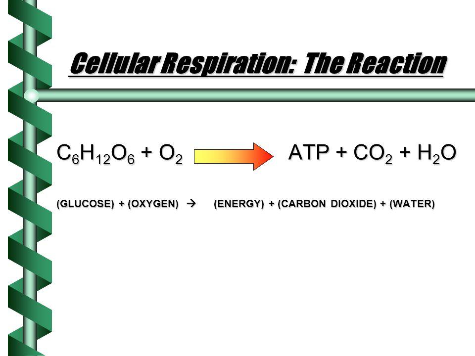 Cellular Respiration: The Reaction