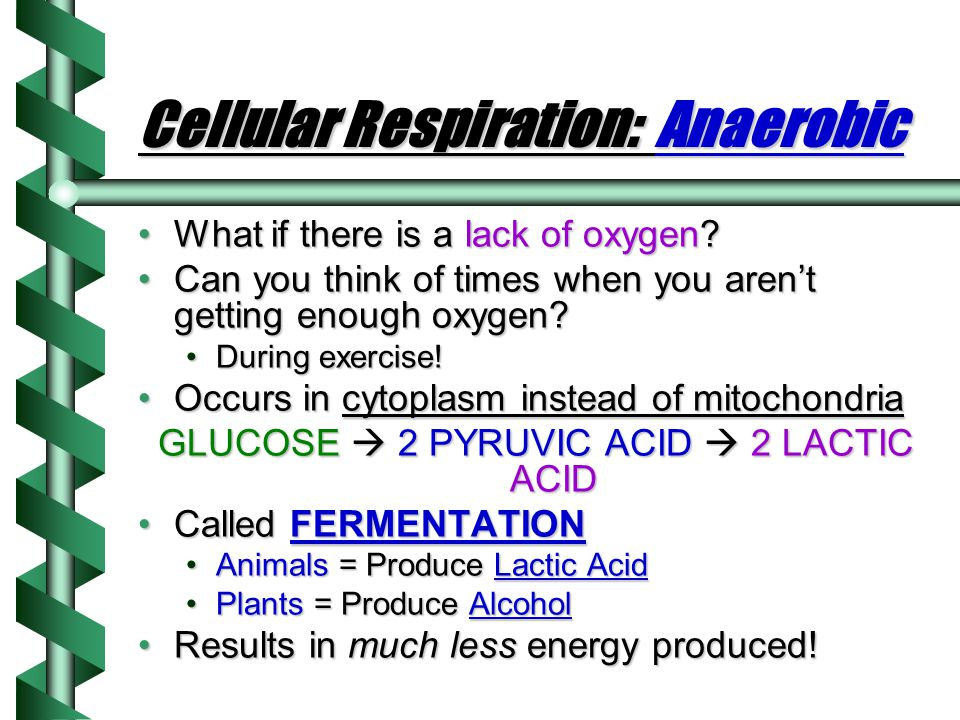 Cellular Respiration: Anaerobic