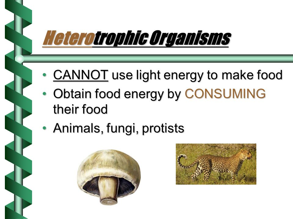 Heterotrophic Organisms