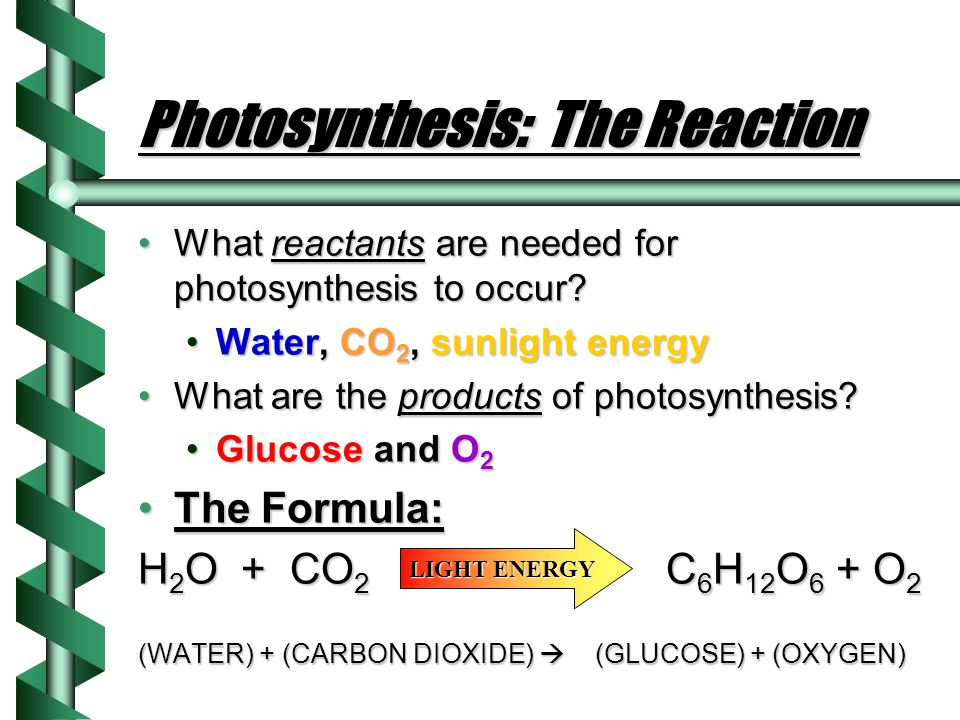 Photosynthesis: The Reaction