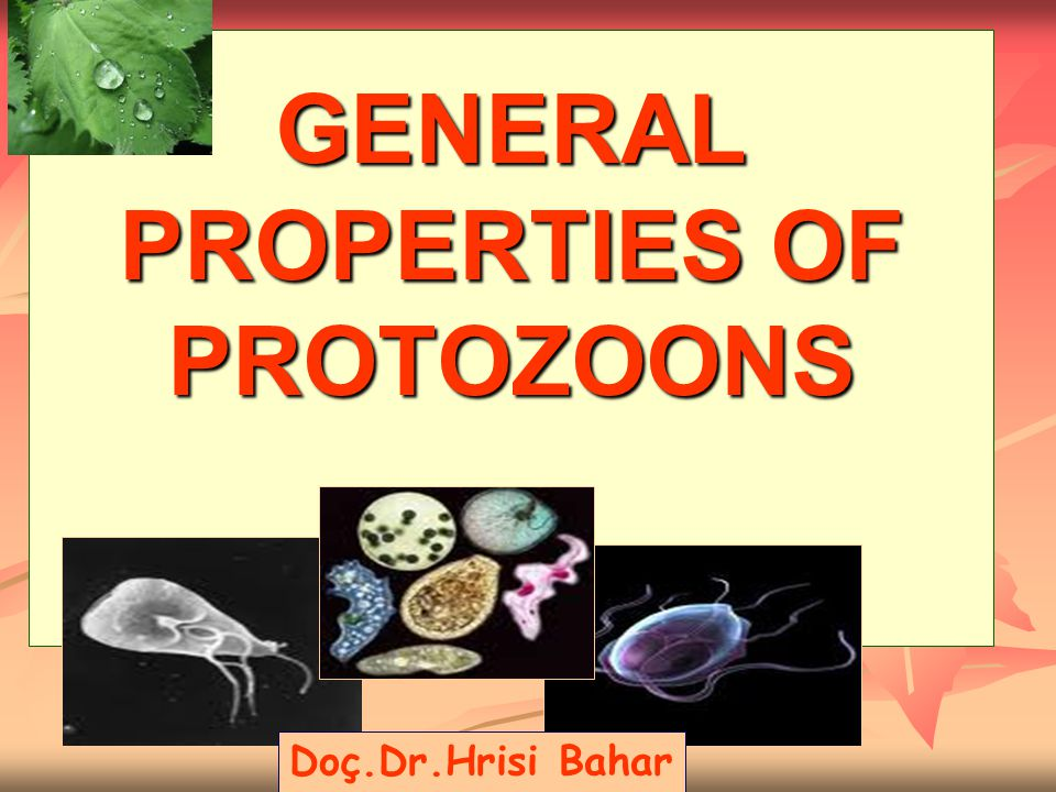 GENERAL PROPERTIES OF PROTOZOONS