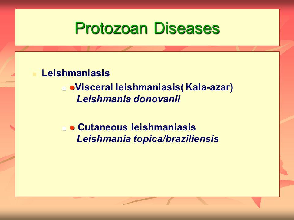 Protozoan Diseases Leishmaniasis