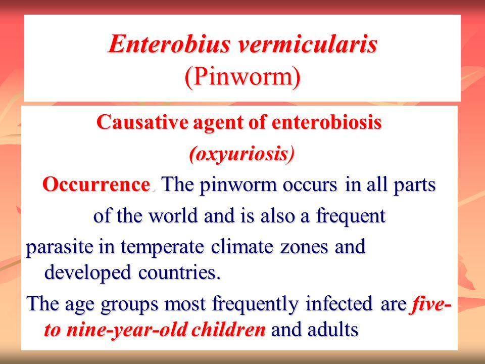 Enterobius vermicularis (Pinworm)