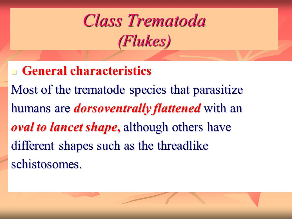 Class Trematoda (Flukes)