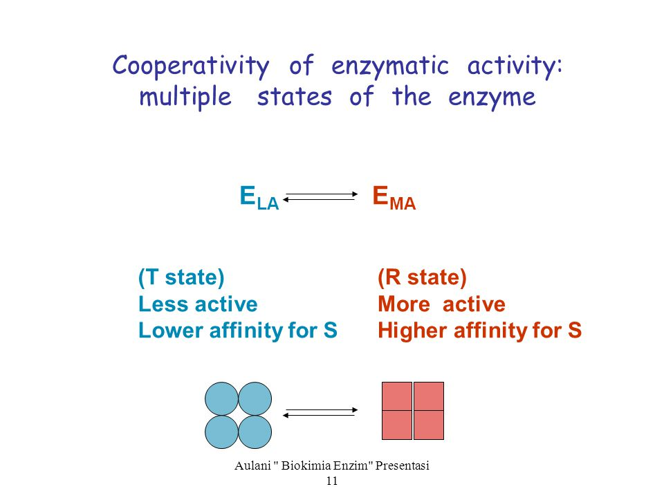 Cooperativity of enzymatic activity: multiple states of the enzyme