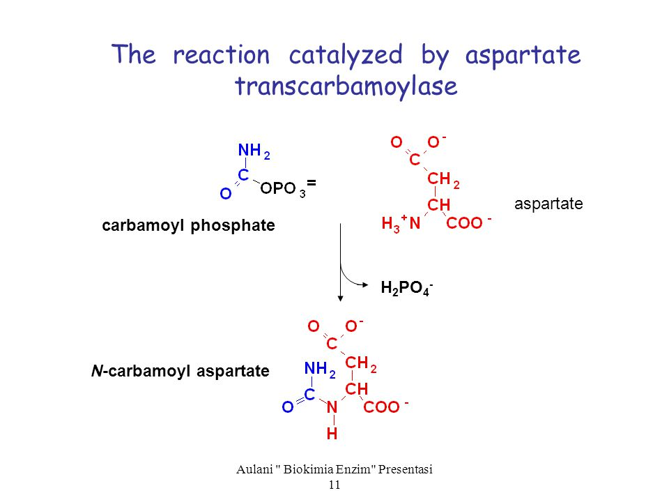 The reaction catalyzed by aspartate transcarbamoylase