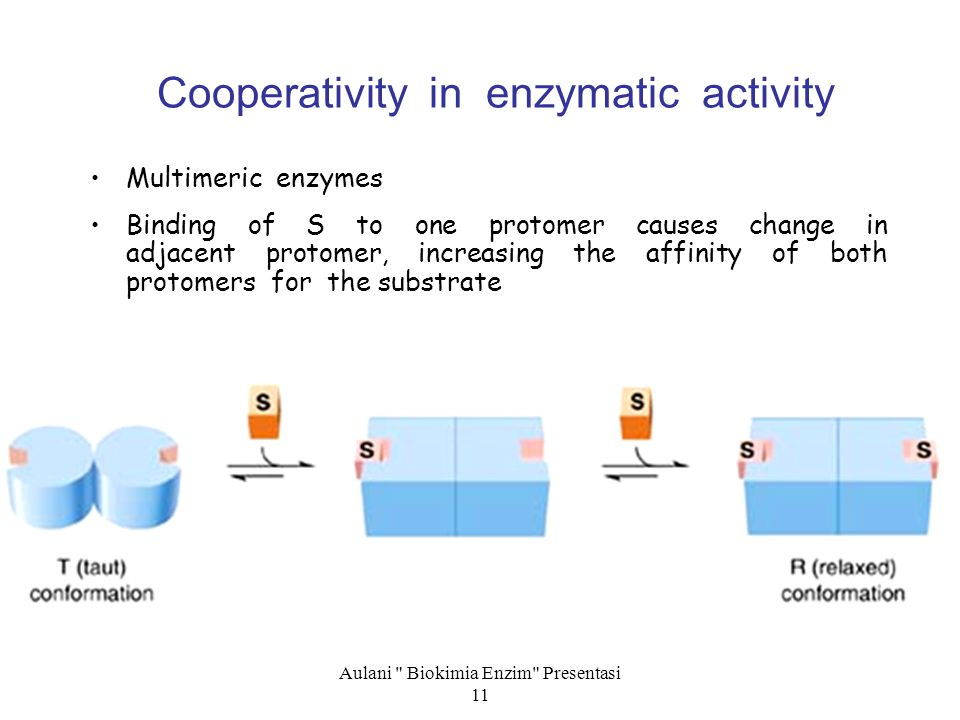 Cooperativity in enzymatic activity