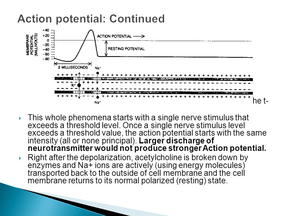 Action potential: Continued