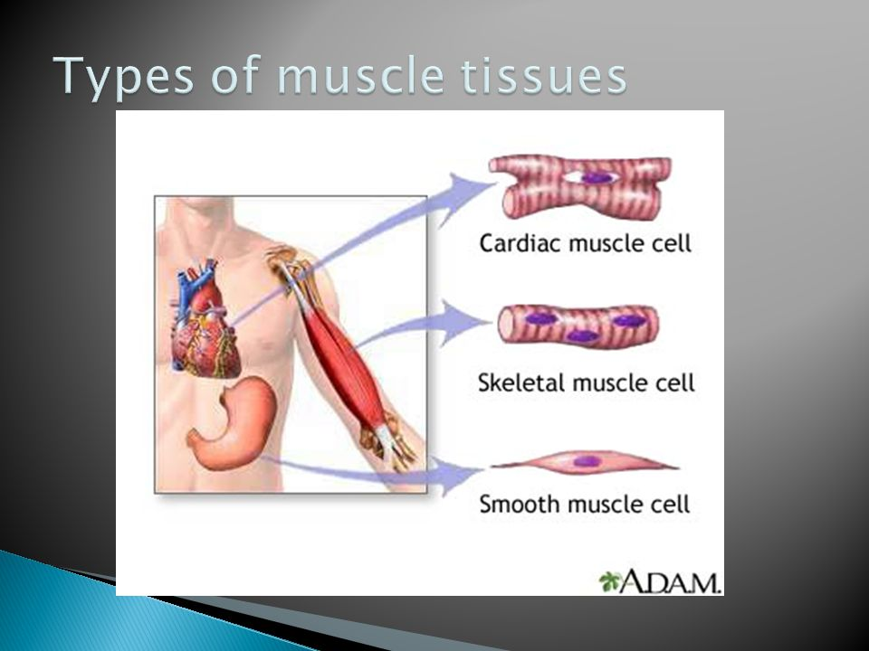 Types of muscle tissues