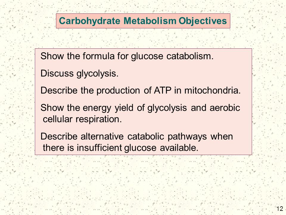 Carbohydrate Metabolism Objectives