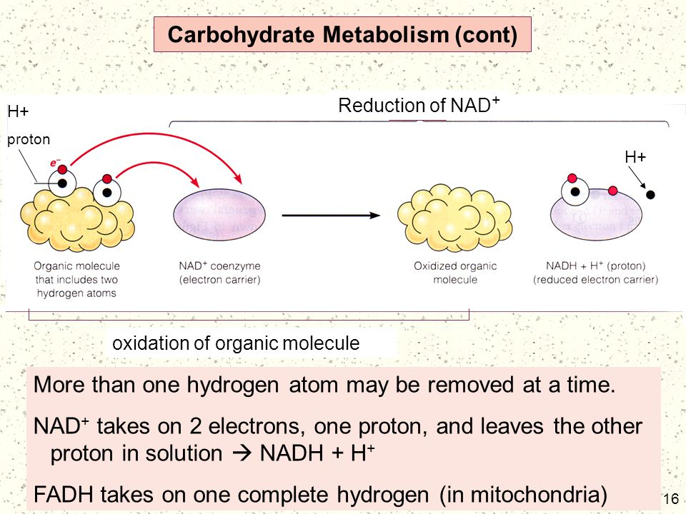 Carbohydrate Metabolism (cont)