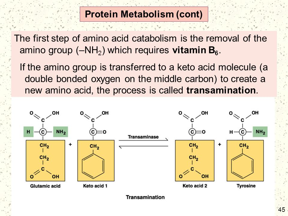 Protein Metabolism (cont)