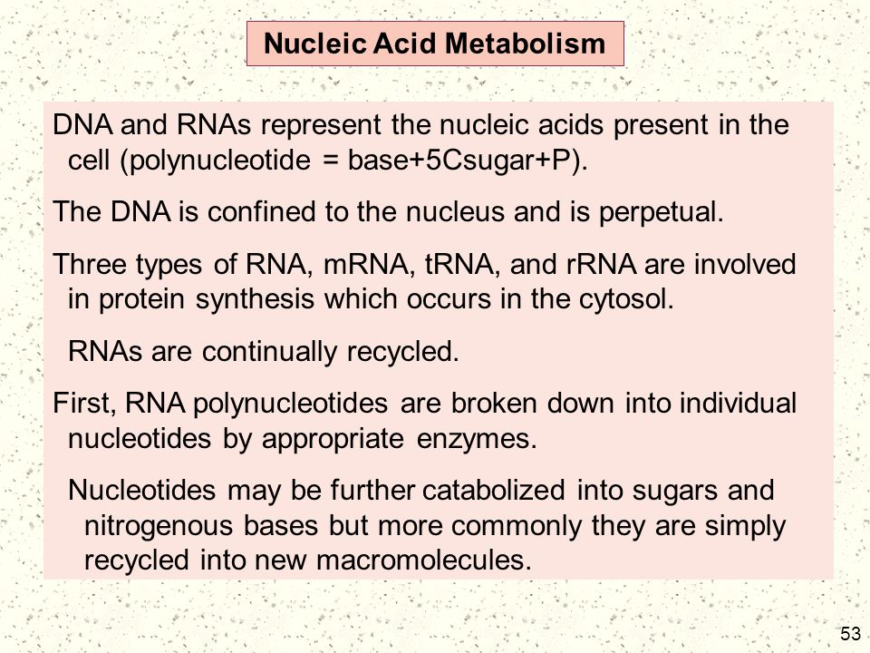 Nucleic Acid Metabolism