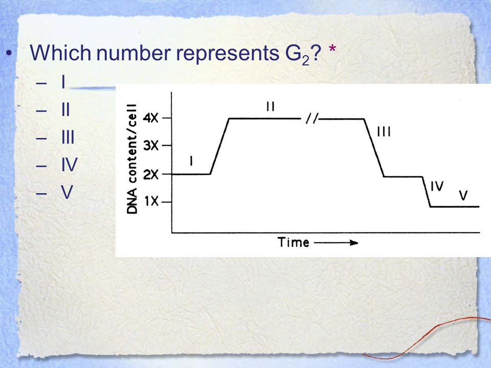 Which number represents G2 *