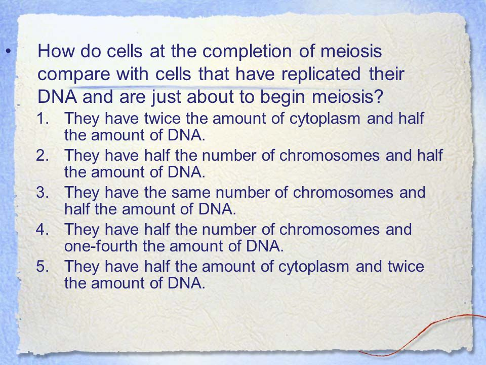How do cells at the completion of meiosis compare with cells that have replicated their DNA and are just about to begin meiosis