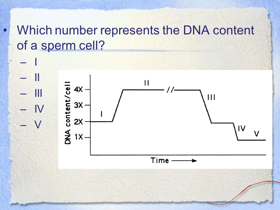 Which number represents the DNA content of a sperm cell