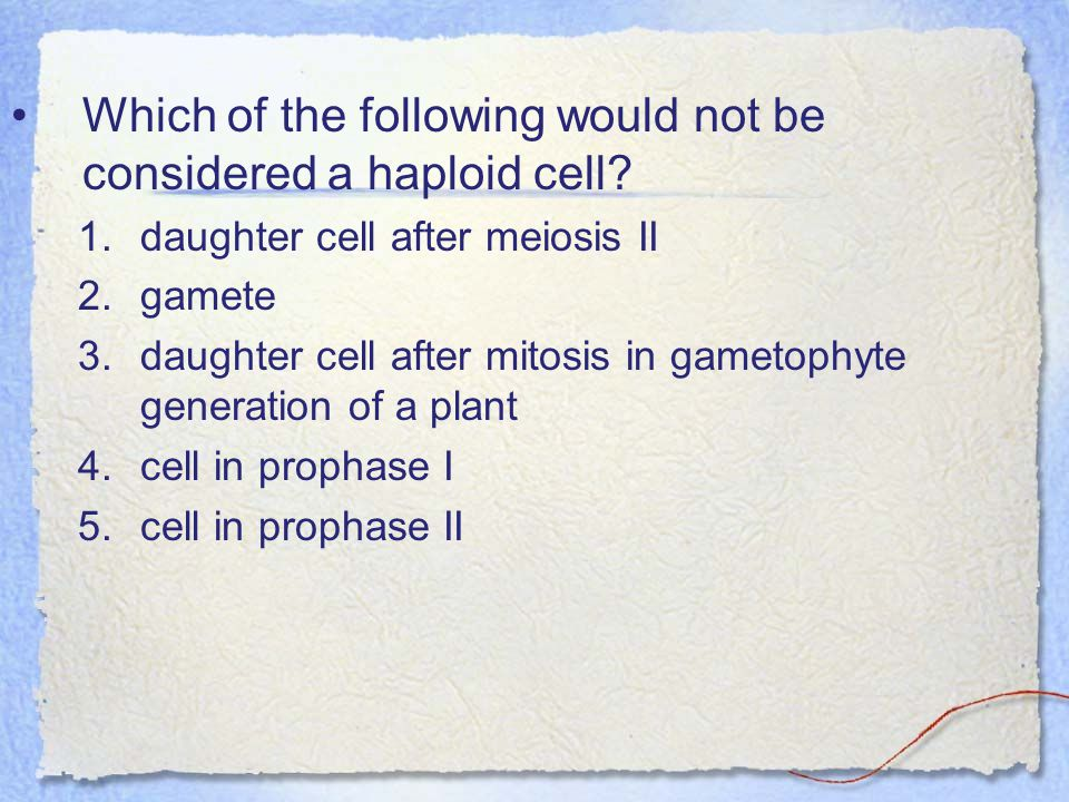 Which of the following would not be considered a haploid cell