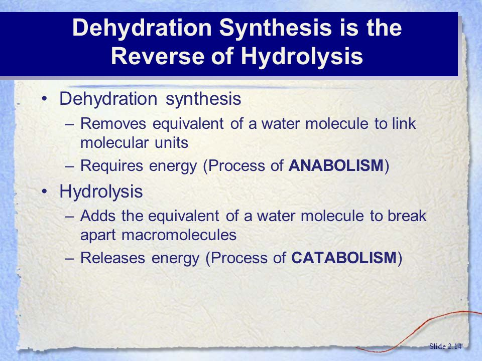 Dehydration Synthesis is the Reverse of Hydrolysis