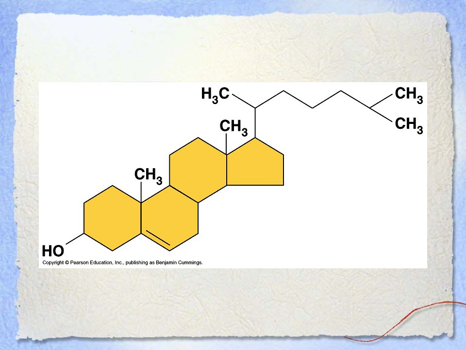 Steroid – Cholesterol-=4 fused rings w/ attached chemical groups