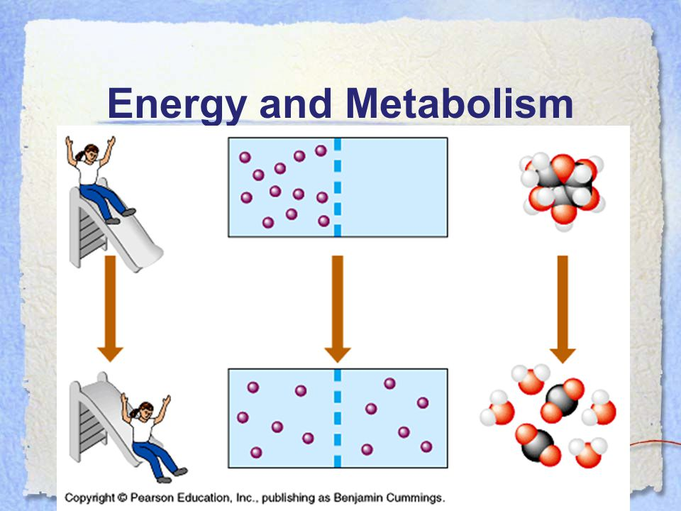 Energy and Metabolism