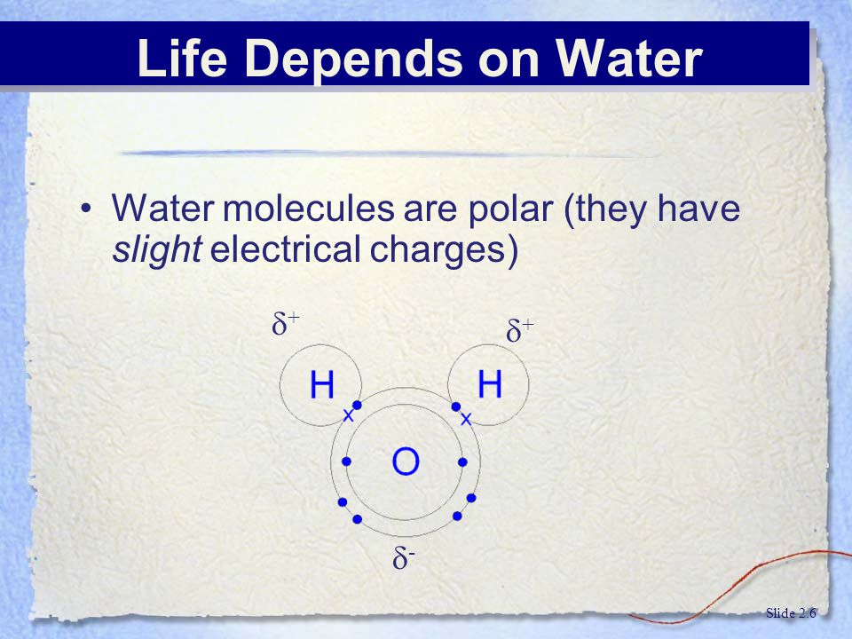 Life Depends on Water Water molecules are polar (they have slight electrical charges) + + - Slide 2.6.