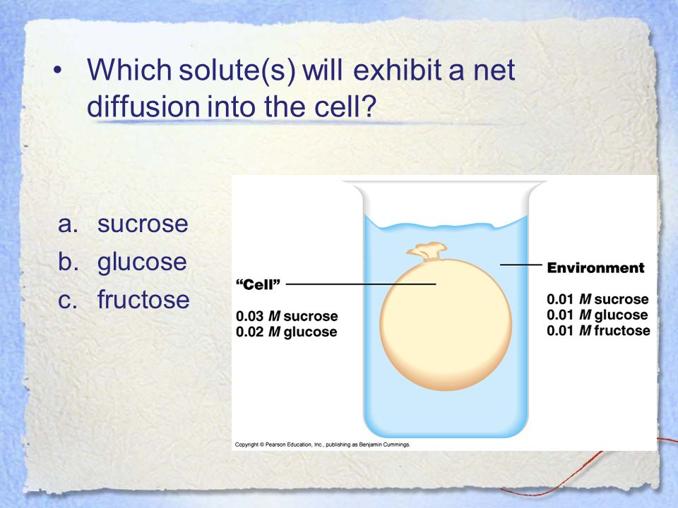 Which solute(s) will exhibit a net diffusion into the cell