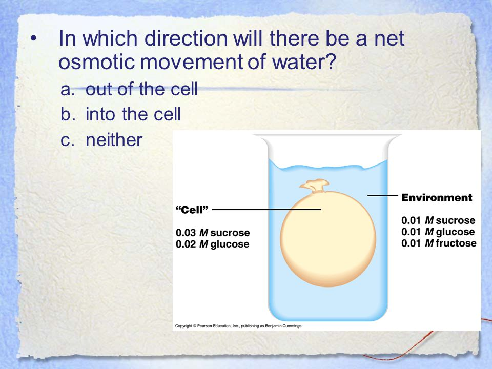 In which direction will there be a net osmotic movement of water