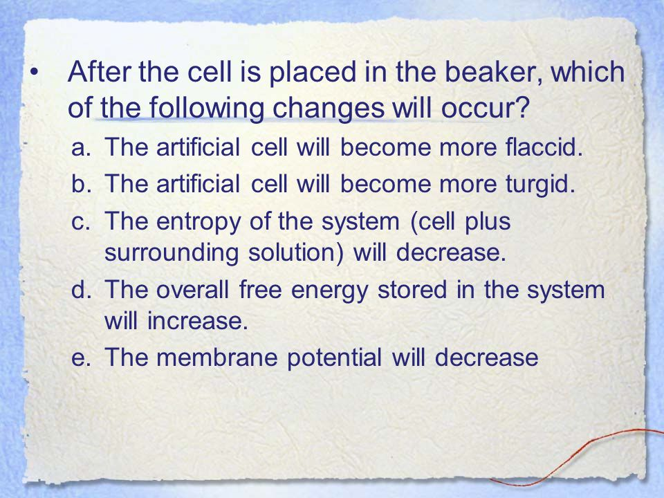 After the cell is placed in the beaker, which of the following changes will occur The artificial cell will become more flaccid.