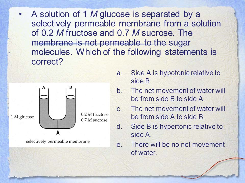 A solution of 1 M glucose is separated by a selectively permeable membrane from a solution of 0.2 M fructose and 0.7 M sucrose. The membrane is not permeable to the sugar molecules. Which of the following statements is correct