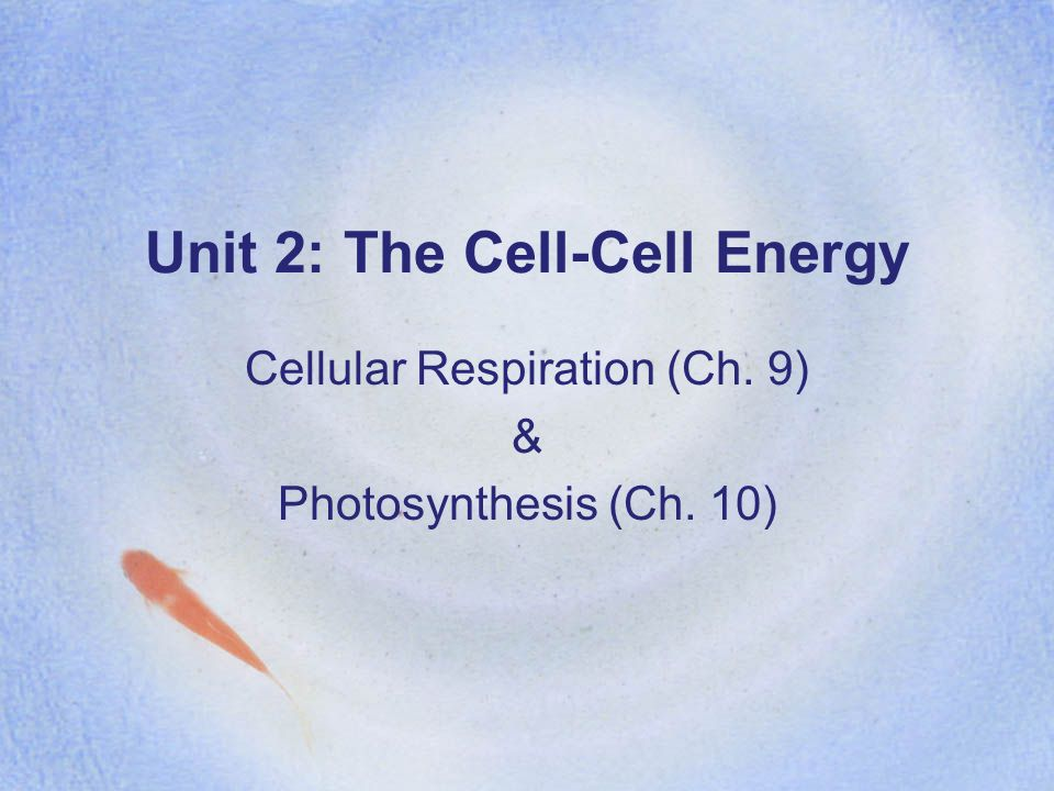 Unit 2: The Cell-Cell Energy