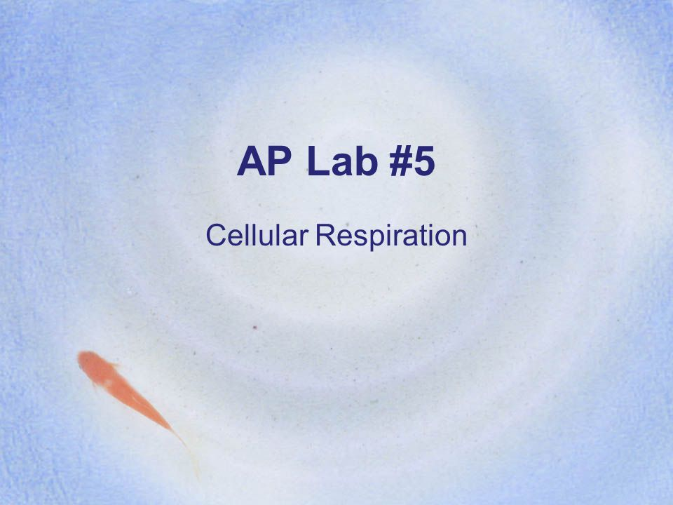 AP Lab #5 Cellular Respiration