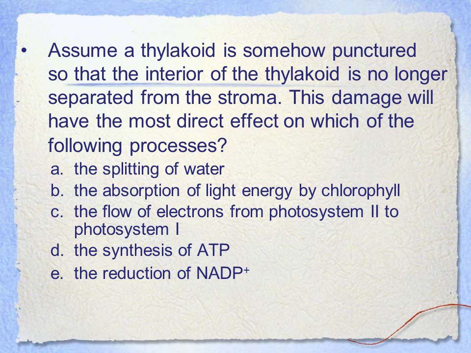 Assume a thylakoid is somehow punctured so that the interior of the thylakoid is no longer separated from the stroma. This damage will have the most direct effect on which of the following processes