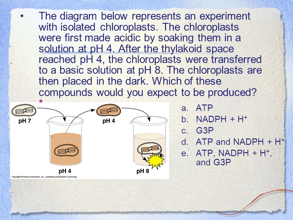The diagram below represents an experiment with isolated chloroplasts