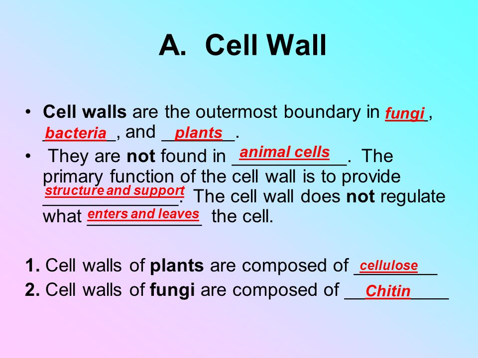 A. Cell Wall Cell walls are the outermost boundary in ____, _______, and _______.