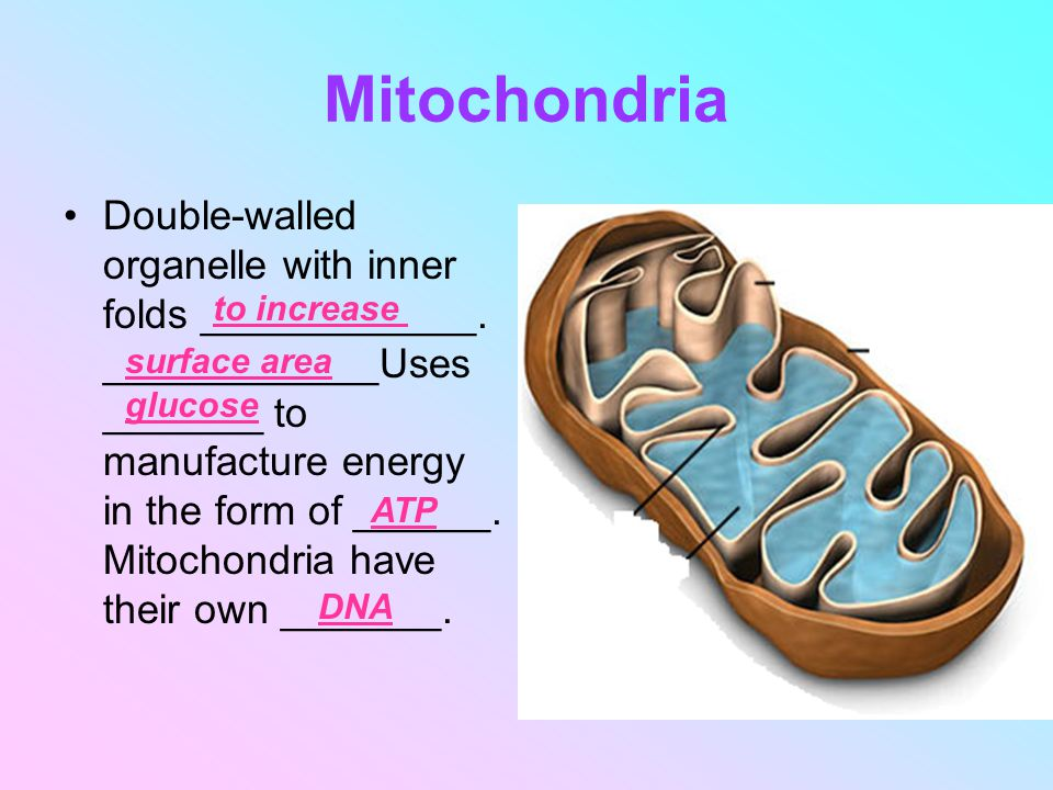mitochondria contain their own dna circular and have a double membrane Mitochondria contain their own dna (circular) and have a double membrane what explanation for this observa.