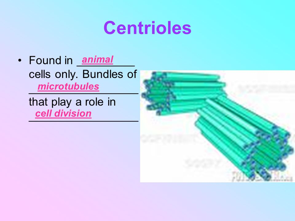 Centrioles Found in _________ cells only. Bundles of _________________ that play a role in _________________.