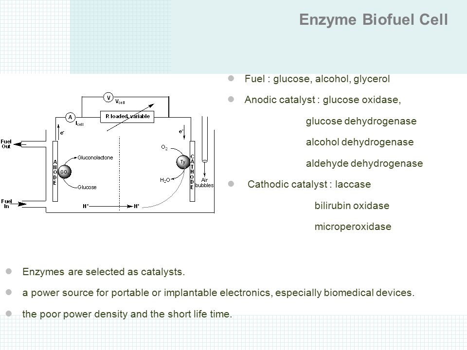 Enzyme Biofuel Cell Fuel : glucose, alcohol, glycerol